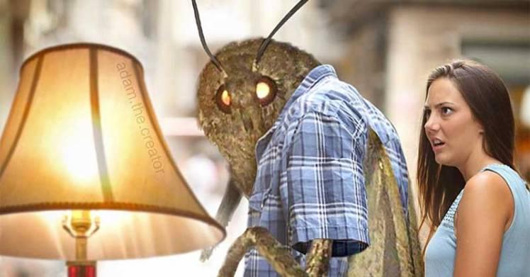moth-memes-th